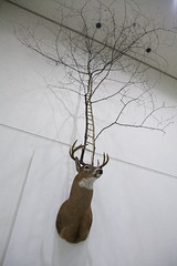 Untitled     Deer Taxidermy, Tree.     Installation     300 X 300 X 450 (cm)  118 X 118 X 177 (inch)