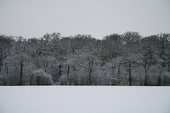 snowy tree line (Jon Downs) Tags: uk trees brown white mist snow black color colour tree green art colors field digital canon downs landscape creativity photography eos grey photo jon flickr artist colours photographer image unitedkingdom gray creative picture pic photograph 7d treeline snowscape tempsford jondowns tempsfordroad
