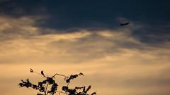 Todo es posible (Reliver Arguello) Tags: natural aves vista bella belleza avion aviones ambiental silueteado