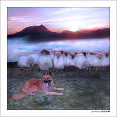 El rebaño y el perro (Jabi Artaraz) Tags: mist sol fog sony perro amanecer zb bizkaia euskalherria basquecountry oveja paysbasque bruma rebaño txakurra anboto euskoflickr perropastor abigfave flickrdiamond artaldea artzaintxakurra jartaraz alfa350