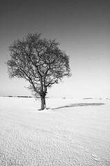 """Snowplicity<br /><span style=""""font-size:0.8em;"""">This image is part of a photoshoot that is discussed in Ian Purves blog -  <a href=""""http://purves.net/?p=1028"""" rel=""""nofollow"""">purves.net/?p=1028</a></span> • <a style=""""font-size:0.8em;"""" href=""""https://www.flickr.com/photos/21540187@N07/8420279386/"""" target=""""_blank"""">View on Flickr</a>"""