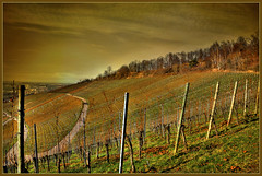 A walk in the vineyards (FocusPocus Photography) Tags: texture deutschland stuttgart vineyards gemany rotenberg badenwuerttemberg weinberge textur lenabemanna