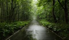 1189 (Keiichi T) Tags: leaf  tree  eos road 6d  green  fog shadow  canon rain mist    japan forest light