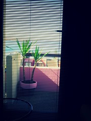 A E S T H E T I C (Solitude is preferred) Tags: vaporwave plant pink blinds venetians shadow sea miami mexican yucca