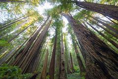 017_7704 (pdxsean) Tags: california crescentcity delnortecounty redwoods prairiecreek hike