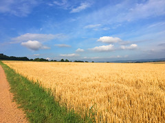 Weizenfeld (10.000 Schritte) Tags: feld getreidefeld weizenfeld blau himmel sonne bäume aussicht gras wiese grün wolken
