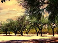Time keeps on tickin' (SarahBelle17) Tags: trees park shadows light sky perspective hot desert tucson mesquite nature leaves amateur