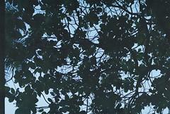 (pytorsavnt) Tags: film kodacolor analog 35mm olympusom1