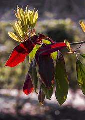 D3286-Flor de exterior, salvaje (Eduardo Arias Rbanos) Tags: composiciones compositions flor flower eduardoarias eduardoariasrbanos panasonic lumix g6