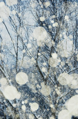 Trees Behind Snow (Javcon117*) Tags: trees snowing abstract snowfall snowflake flakes javcon117 frostphotos winter orbs circles foreground background cold falling