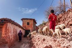 DSC02467.jpg (mikeydread) Tags: moroccophotography moroccoselected morocco marrakech essaouira sonyrx100iv atlas imlil camels