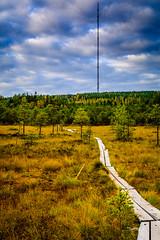 Autumn colors (mihail.suontaus) Tags: finland hollola lightroom nikon sigma tiirismaa autumn blue clouds colors green landscape nature tree wood yellow