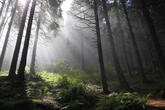 light in the forest (Xtraphoto) Tags: trees tree forest licht sonnenlicht morgenlicht sonnenstrahlen strahlen light sunlight bavaria bayern landschaft landscape