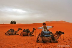 Camel Tours in the Sahara Desert. (Photographing_The_World) Tags: morocco marokk travel travelphotography arabic africa muslimcountry culture wanderlust explore people northafrica moroccan moroccanculture moroccancolors moroccancolours moroccanpeople africanpeople discovermorocco exploremorocco marrakesh marrakech fes fez agadir asilah essaouira merzouga sahara maroc chefchaouen colors travelphotos arabicculture arabicpeople travelblog muslimpeople muslimculture diversity multicultural locals locallife moroccanlifestyle moroccanlife saharadesert berber camel camelrides sanddunes dunes pattern sandtexture moroccantours goldensand golden