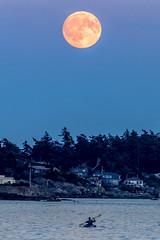 Harvest Moon (Paul Rioux) Tags: britishcolumbia bc vancouverisland esquimalt harbour bluehour harvest full moon kayak kayaker outdoor recreation prioux