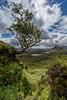 Reach up for the Sky (Kyoshi Masamune) Tags: scotland kyoshimasamune isleofskye westscotland skye innerhebrides highlands wideangle ultrawideangle quiraing lonetree skyrim clouds cloudscape trotternish trotternishpeninsula cleat landscape scottishlandscape biodabuidhe vertorama uk