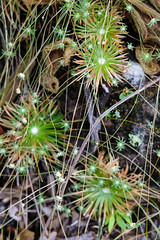 Plantinhas do cerrado (Johnny Photofucker) Tags: planta plant pianta flower flor fiore cerrado lightroom macro vegetal verde green