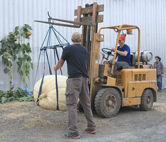 Haulin' (Cindy's Here) Tags: forklift 4wheeledvehicle pumpkin pumpkinmania belluzfamrs slateriver ontario canada canon 116 98