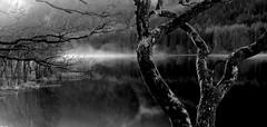 Loch Chon (gajtalbot) Tags: white mist black reflection tree water scotland britain perthshire loch lochchon