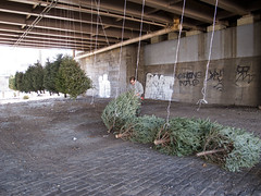 Installation of Suspensed Forest, 2013 (Michael Neff) Tags: christmas new york sculpture streetart ny green art public brooklyn installation williamsburg hanging christmastrees discarded bqe twine hung reuse