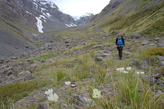 the hills are alive (go wild - NZ outside) Tags: park new trip family people mountain classic weather landscape outdoors three track pass route zealand national wilderness doc tramping passes arthurs harman browning cronin whitehorn wilberforce 2013 threepasses