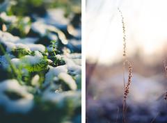 Dissolve me (Kaat dg) Tags: winter light snow cold nature season nikon bokeh 50mm14 nikkord5100