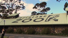 Auckland Zoo (Abi Skipp) Tags: newzealand zoo auckland