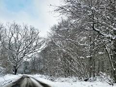 Slippy (Peter Sillitoe) Tags: road trees white snow canon hampshire winchester s100 micheldever