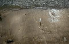 egret (susodediego ) Tags: praia beach grancanaria strand playa canaryislands garza lascanteras reiher kanarischeinseln aigrette garzetta 白鷺 thegalaxy белаяцапля leicadlux4 mygearandme ringexcellence flickrstruereflection1 flickrstruereflection2 rememberthatmomentlevel1 infinitexposure