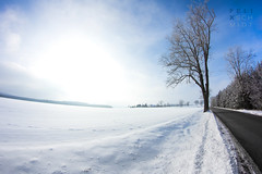 Winter Road (Felix Schmidt Photography) Tags: road lighting street wood blue trees light shadow sky sun mountains color detail tree nature colors beauty composition forest canon germany outdoors photography eos wooden focus mood photographer shadows angle outdoor pov background details perspective atmosphere sunny fisheye dreams balance exploration 8mm tones tone walimex harz saxonyanhalt 60d friedrichsbrunn