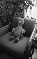 Bird in the waiting room (inetjoker) Tags: tn minolta tennessee hc110 clarksville x700 apx400 dilutionb autaut
