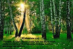 Colossians 3-12 nlt (snapnpiks) Tags: life love church true rock stone easter born high truth heaven king christ god spirit brother father ghost religion jesus lord christian mount holy moses again olives lamb bible judge alive commandments messiah risen salvation abba sanctuary prayers tabernacle nations sabbath blessed redeemer almighty 312 sins scriptures passover nlt faithful everlasting slain forgive baptised crucified preist apostle forgiven colossians deciples reserection strongtower