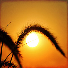 invisible jets and breathings (1crzqbn) Tags: sun sunlight color macro texture nature grass sunrise reflections square golden bokeh 7d ie shining hss vividimagination artdigital trolled awardtree daarklands magicunicornverybest crazygeniuses exoticimage 1crzqbn sliderssunday netartii invisiblejetsandbreathings