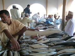 """Rustaq fish market (John Steedman) Tags: oman fishmarket muscat 阿曼 sultanateofoman مسقط سلطنةعُمان rustaq オマーン 오만 الرستاق """"オマーン国"""" """"阿曼蘇丹國"""""""
