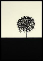 Manicure (unexpectedalien) Tags: blackandwhite tree 50mm monocrome sonynex7 zeiss502zm