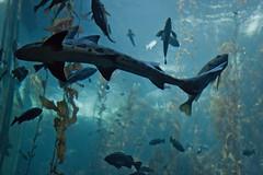 fish aquarium sharks