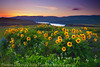 Rowena Sunset (Darren White Photography) Tags: sunset sky nature clouds oregon spring northwest scenic columbiariver pacificnorthwest wildflowers washingtonstate lupine rowena balsamroot fadinglight oregonlandscapes darrenwhite tommccallpreserve northwestlandscapes darrenwhitephotography landscapesoforegon
