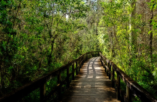 Everglades: boardwalk