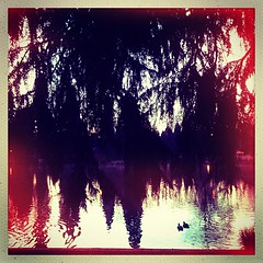 """#reflection of #trees at #dawn two #ducks #pond • <a style=""""font-size:0.8em;"""" href=""""https://www.flickr.com/photos/61640076@N04/8539027471/"""" target=""""_blank"""">View on Flickr</a>"""