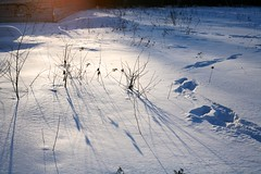When Shadows Grow Longer (Nekr0n) Tags: winter sun snow digital canon 50mm shadows russia 5d canon5d f18 primelens
