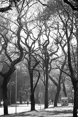 Entrelaçados (renanluna) Tags: park parque trees light bw folhas luz leaves brasil canon blackwhite br sãopaulo branches pb sp 55 galhos pretoebranco monocromia 011 árvores canoneosdigitalrebelxs ef55250mmf456is renanluna