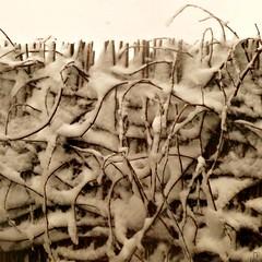 Embrouillamineige (mooonalila) Tags: contraste neige blanc gouarec