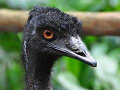 singapore jurongbirdpark tropicalbirds singaporebirdpark