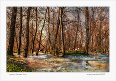 sunset in the magic forest (paolo paccagnella) Tags: wood trees sunset horses panorama water photo italia paolo area driver acqua paesaggio magicforest veneto territorio percorso wett canonefs1022mmusm canoneos7d aplaceforgreatphotographers phpph phpphotography phpphpaolo