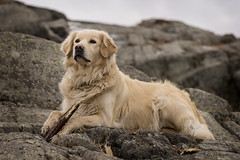 Sara (Birgit F) Tags: ocean blue sea dog green norway goldenretriever march spring waves photowalk skagerrak homborsund grimstad austagder fimbulwinter kalvehageneset homborsundfotoklubb