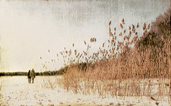 Reeds in Winter I (Explored) (Raf...) Tags: people snow texture reeds explore shore seashore digitalartwork magicunicornverybest magicunicornmasterpiece imageourtime