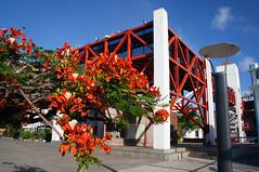 Centro Drago do Mar (Arimm) Tags: street red flower lamp metal mar do centre centro structure lamppost fortaleza flamboyant regia cultural drago delonix arimm