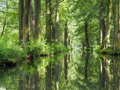 Spreewald (Ina Hain) Tags: tree green nature water landscape wasser forrest natur olympus kanal grn spree landschaft wald spiegelung burg spreewald schilf wurzeln spreewaldhof hochwald leipe fliess