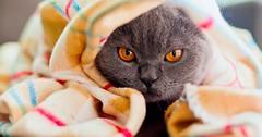 Cat Behavior via http://ift.tt/29KELz0 (dozhub) Tags: cat kitty kitten cute funny aww adorable cats