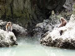 Koh Panak (Sea Kayaking), Thailand (Jan-2016) 21-100 (MistyTree Adventures) Tags: kohpanak kohpanakisland aophangnganationalpark seasia thailand phuket panasoniclumix outdoor phangngabay water lagoon limestone animal monkey macaque macaquemonkey